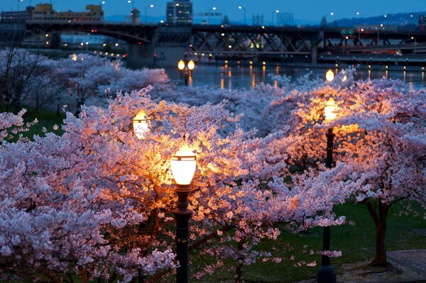 the lights of the City night lights evening spring bridges the river