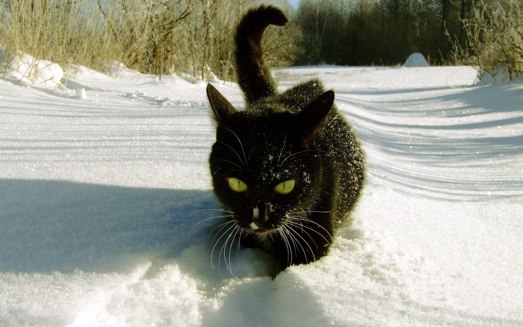 cats snow winter cat cold nature frost outdoors pet portrait frozen one