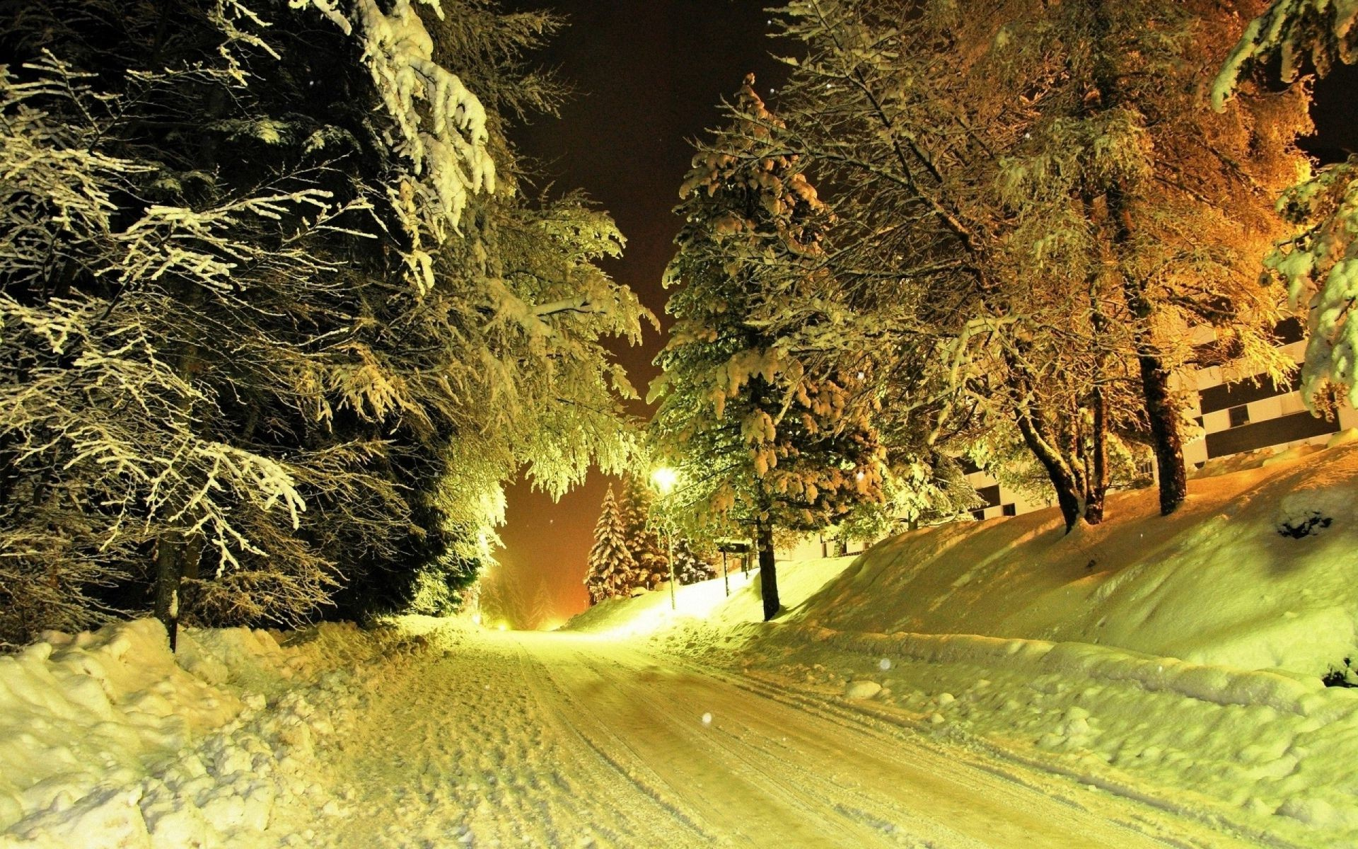winter nature tree light travel wood outdoors landscape leaf road fall