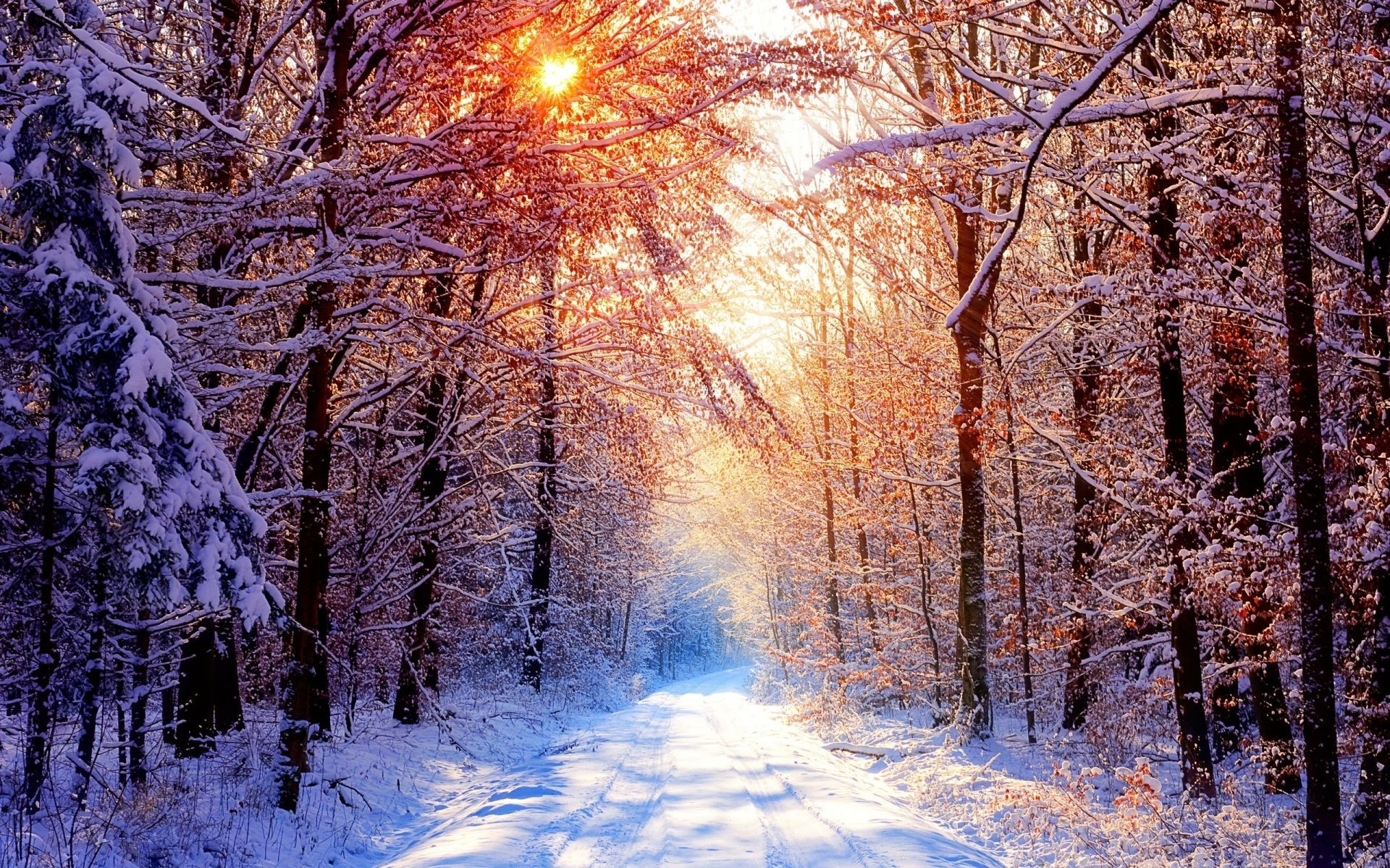 winter alley light trees beautiful picture