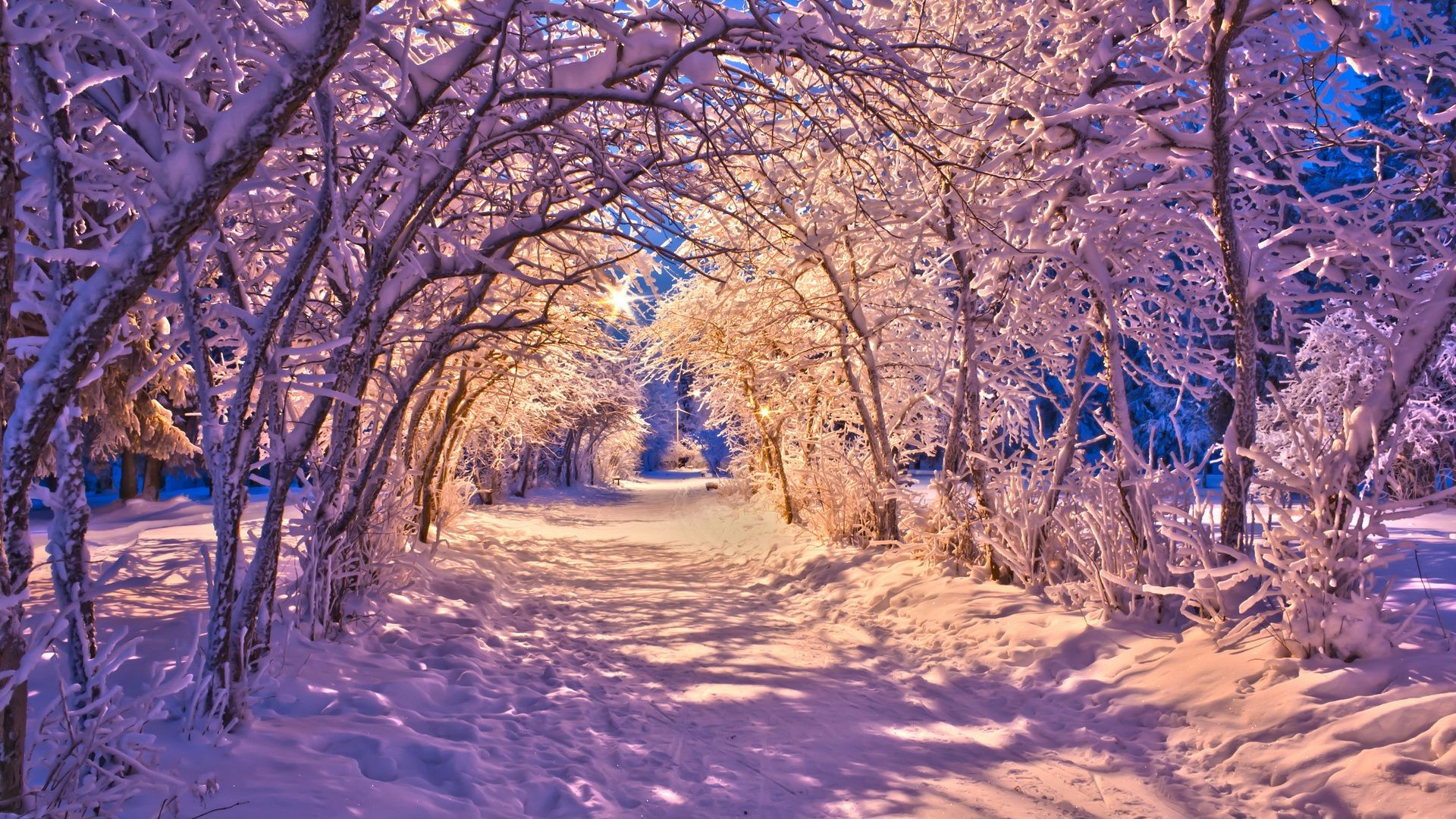 winter forest snow light lights night trees nature