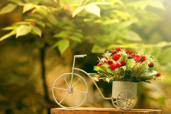 rose flowers bike background