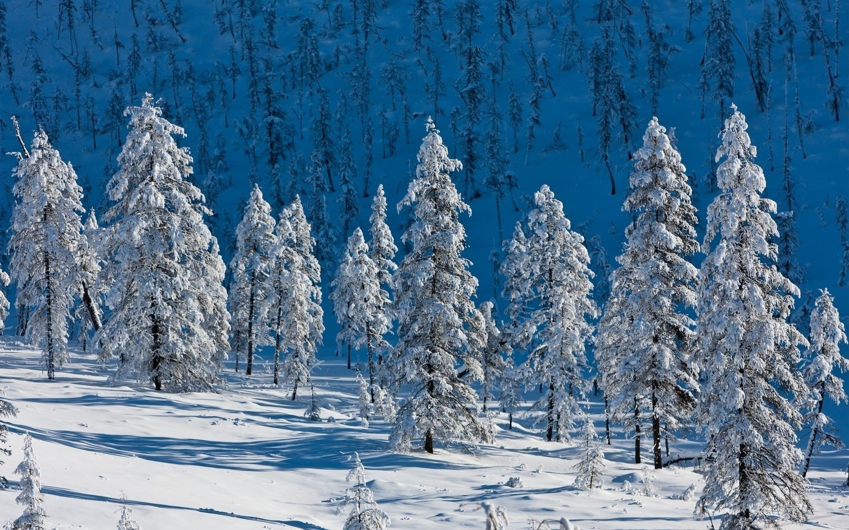 cold trees snow