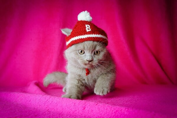 beanie kitty pink background