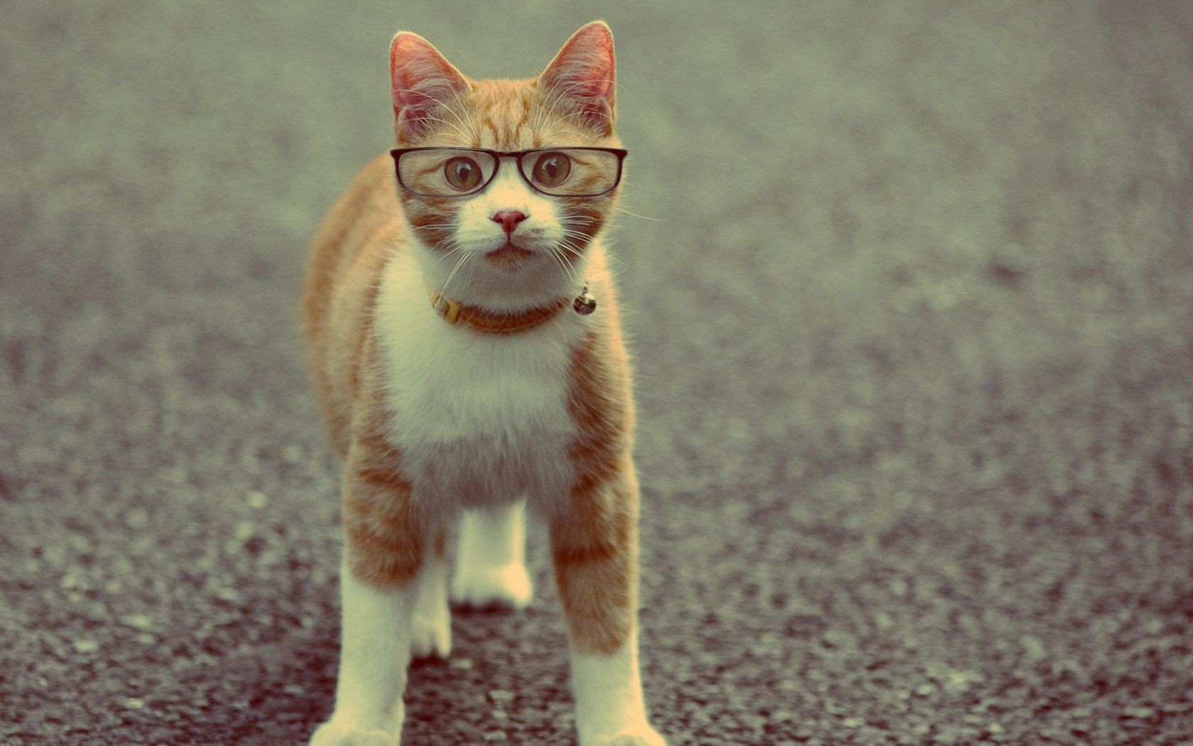 Cat Glasses Sunglasses IPhone Wallpapers For Free