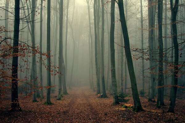 Foggy wood foliage trees fog forest autumn branches