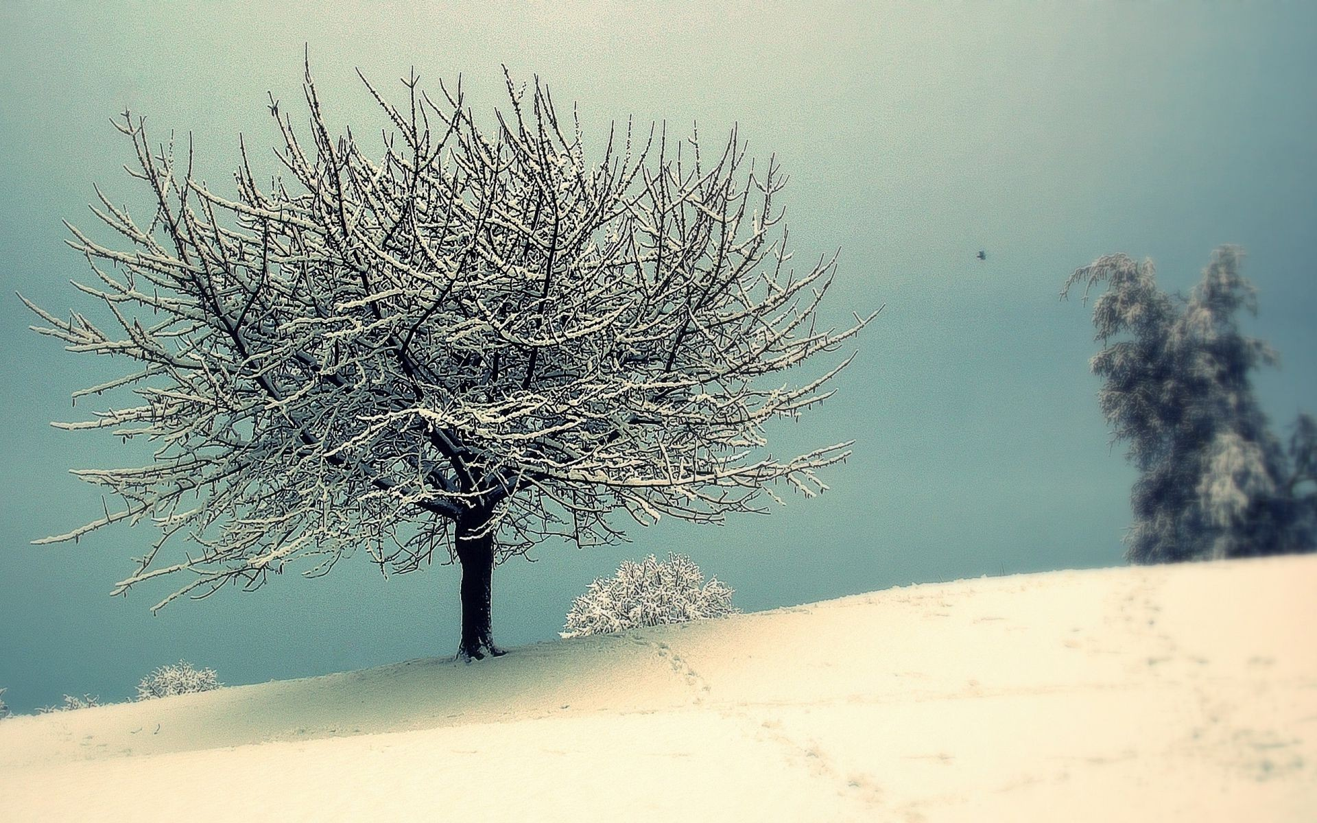 winter tree snow landscape cold nature frost fog outdoors sky weather fair weather dawn