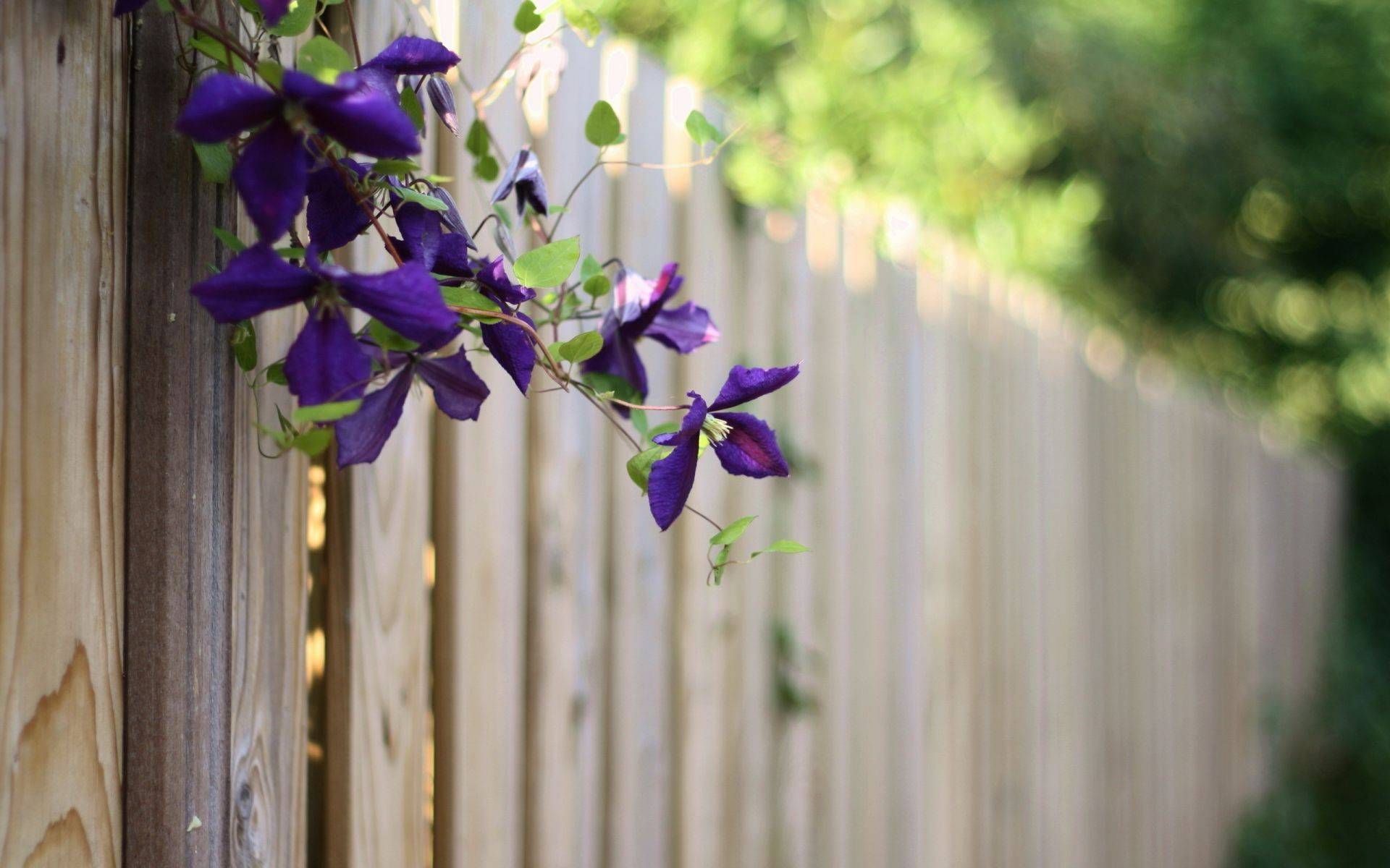 flowers summer Fence