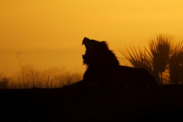 silhouette sunset teeth lion jaws of night
