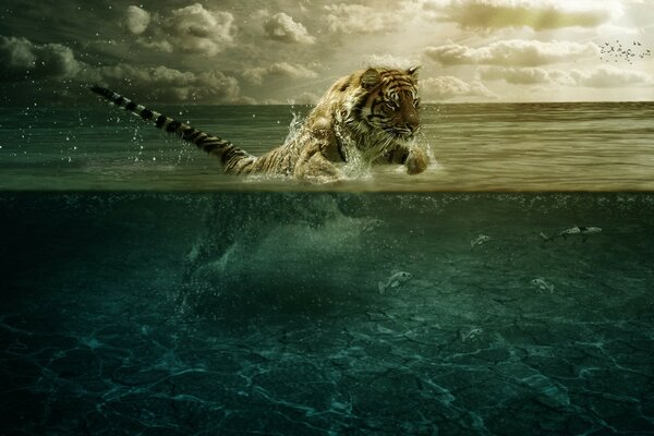 Tiger Playing in Water