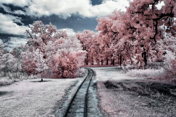 Through the Pink Woods