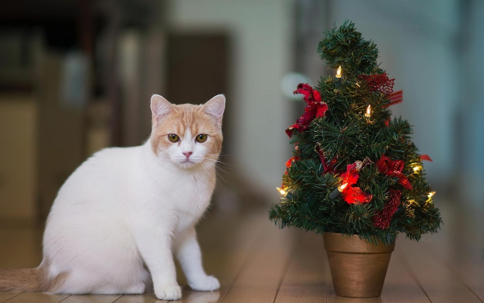 candles new year Christmas tree cat