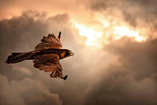 the flight of the clouds a Hawk
