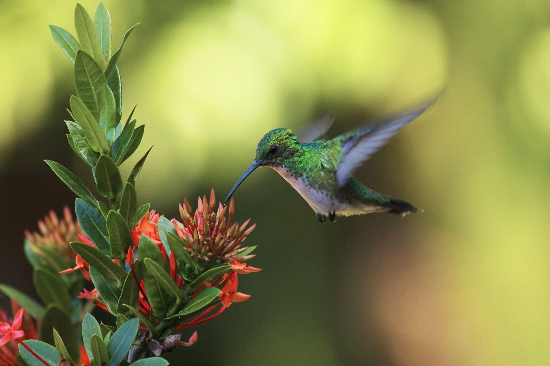 птица цветок  № 2034059 загрузить