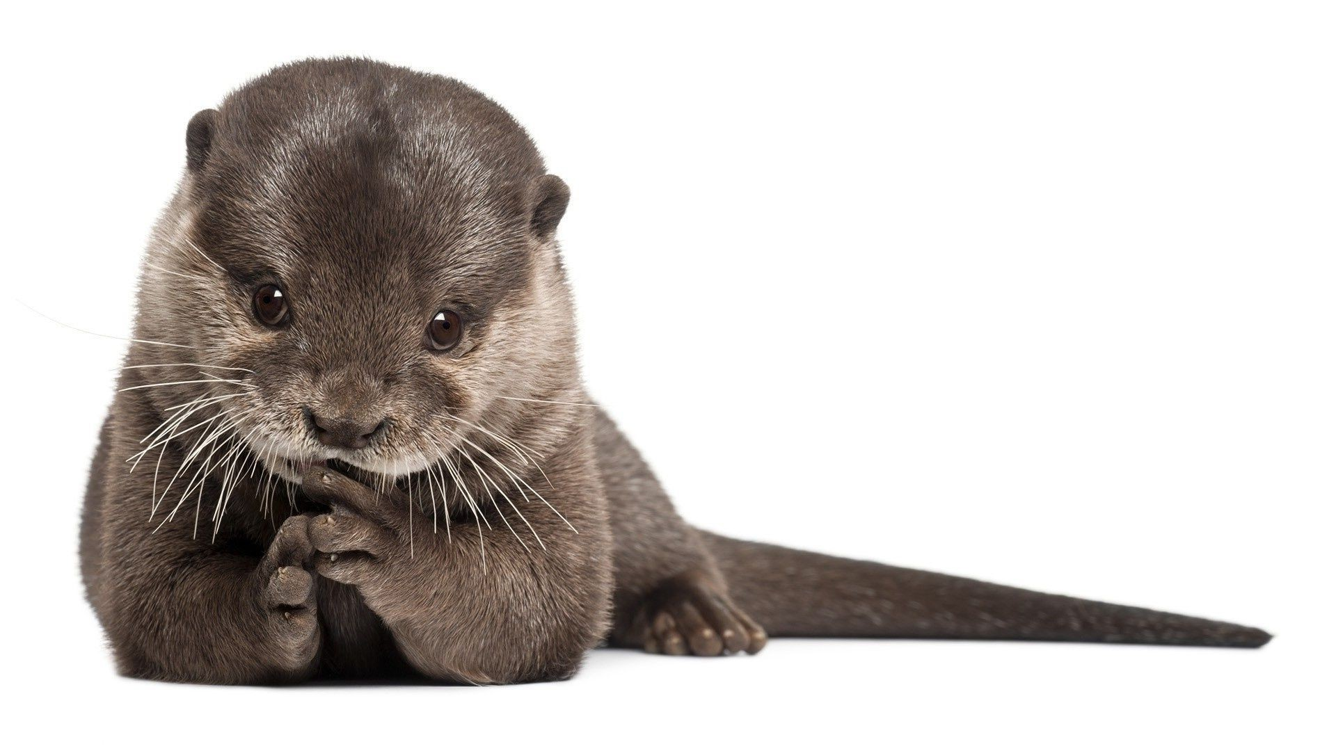 animals cute animal little mammal fur young looking whisker