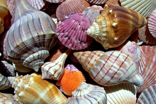 sea world sea shells macro Nature color