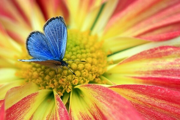 butterfly flower nature