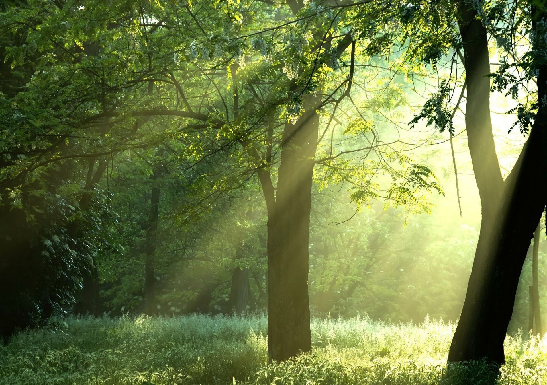 sunshine Green trees nature trees forest sun beam