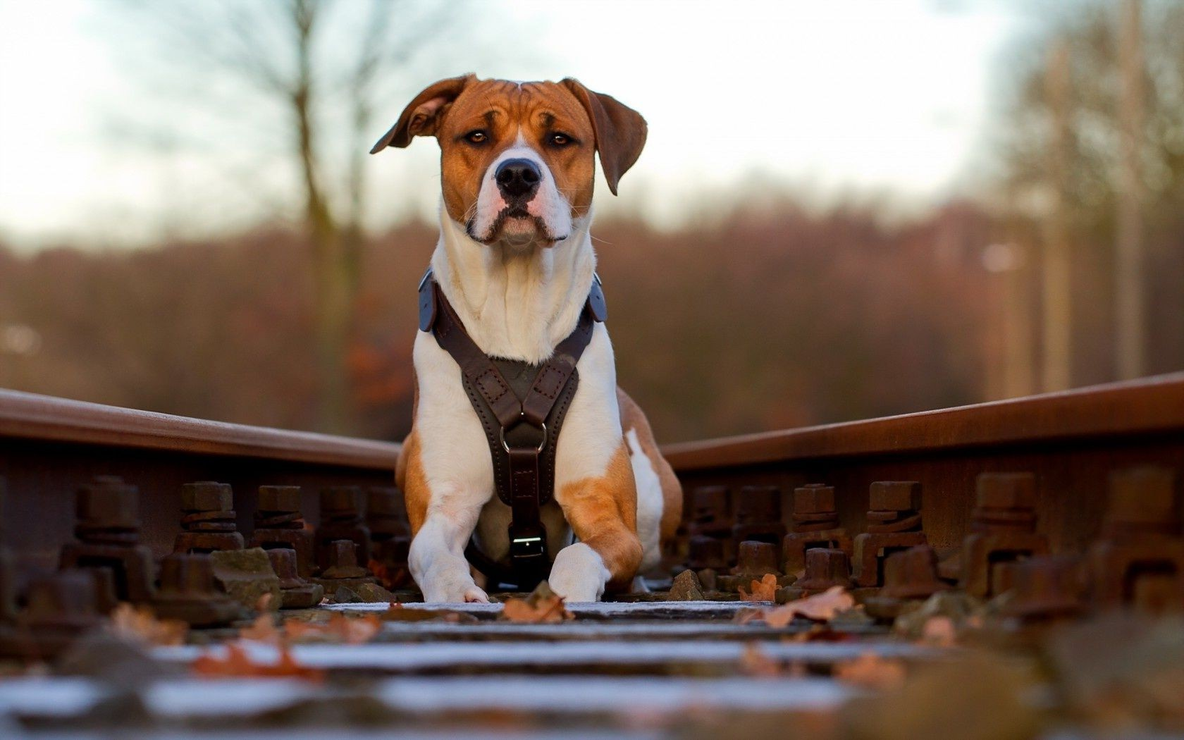 dog background railway