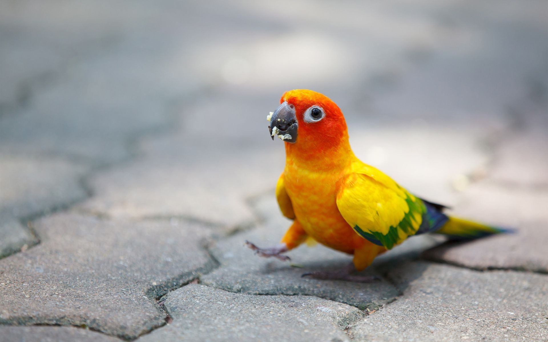 bright bridge parrot chips bird