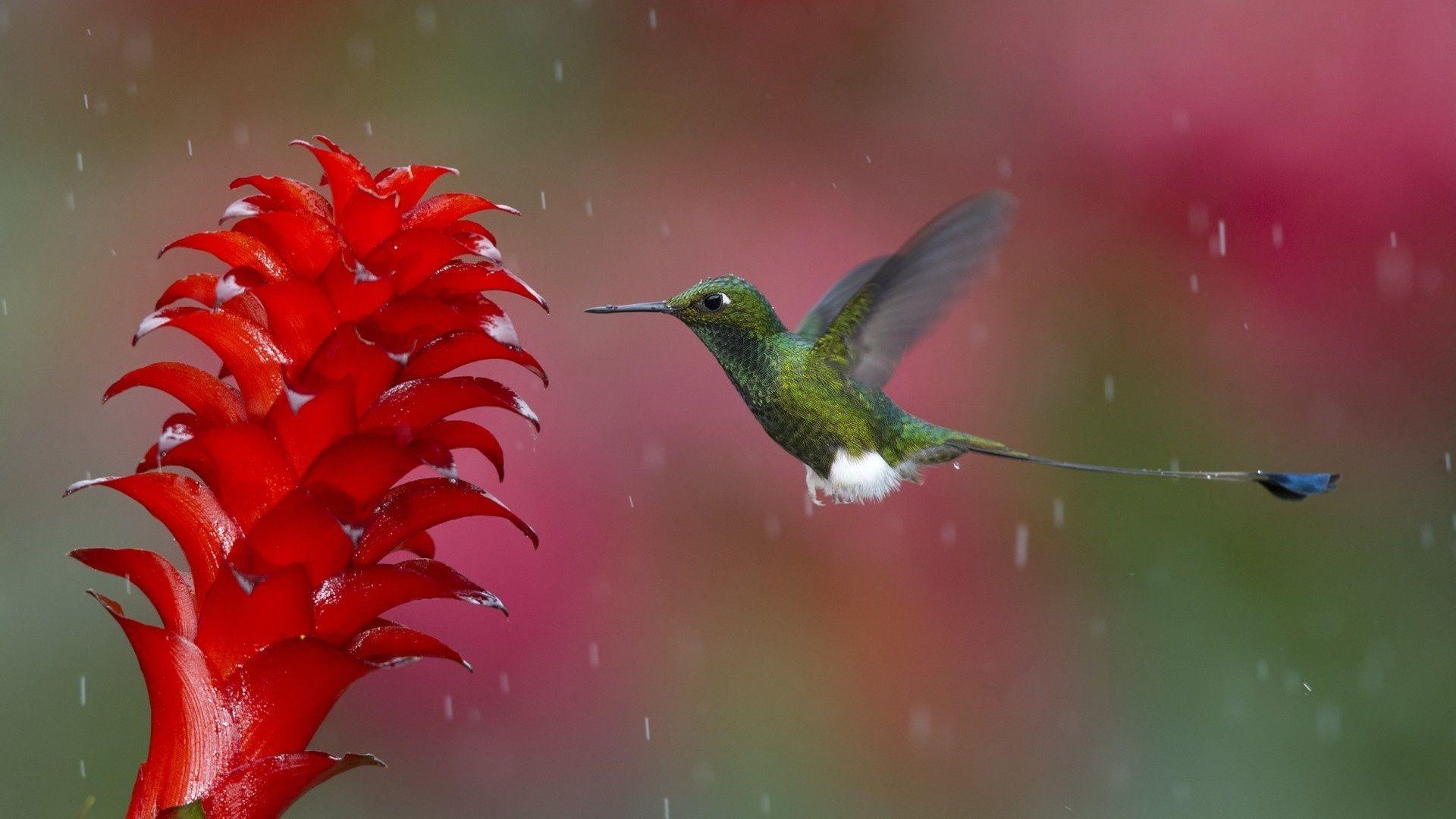 природа колибри цветы птицы скачать