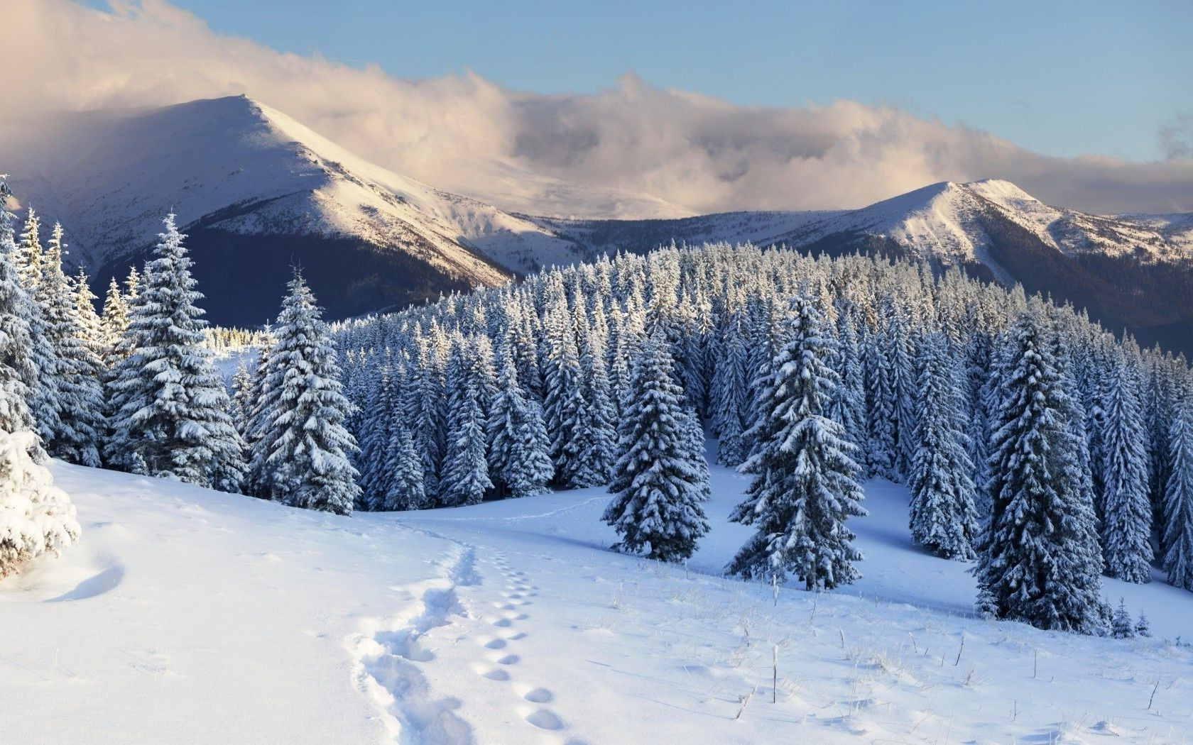 mountains tree trees winter snow traces
