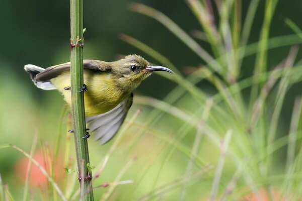 bird branch grass Bird sunbird Sunbird