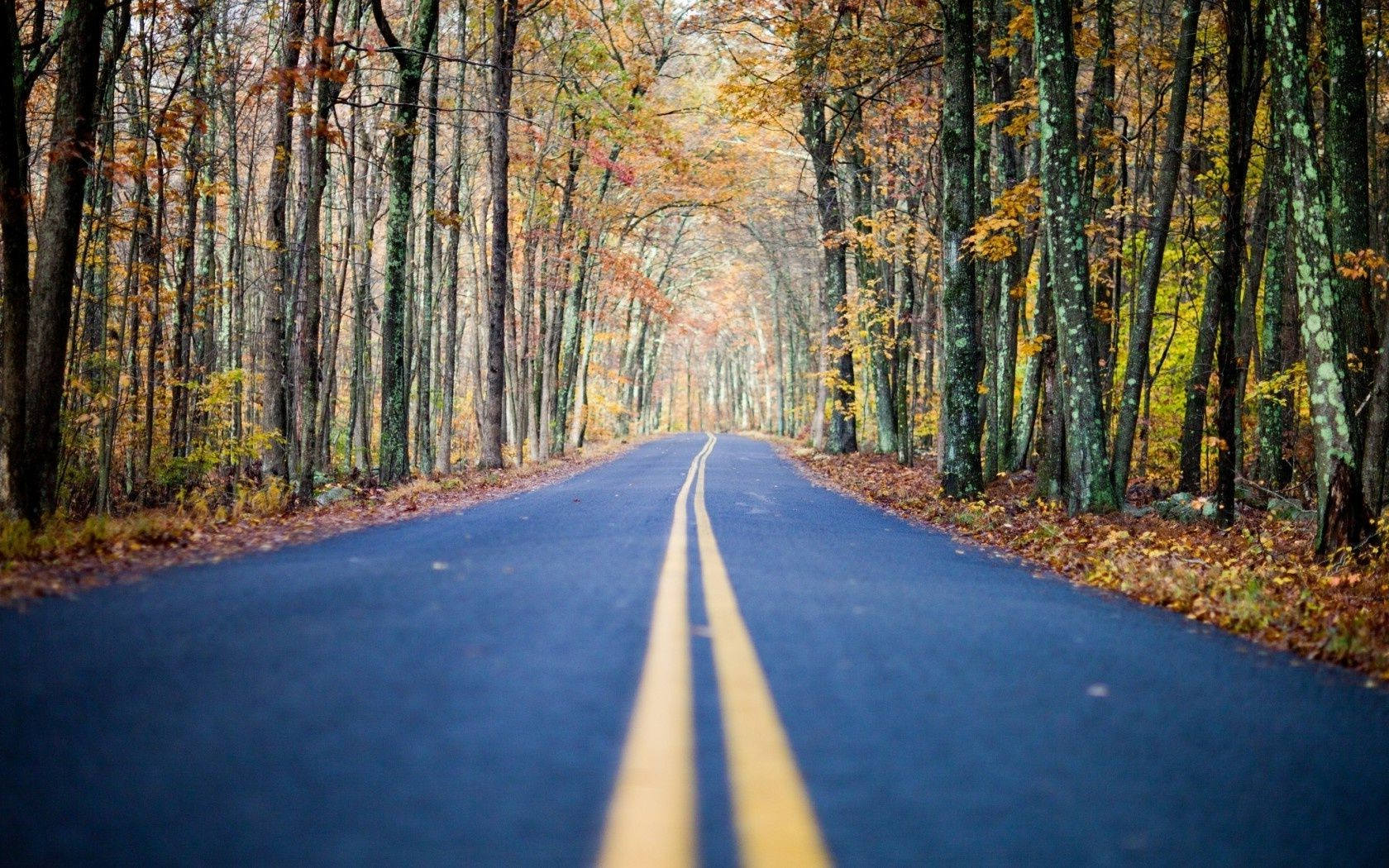 autumn road nature forest
