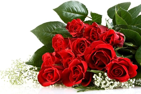 red bouquet white Roses background roses