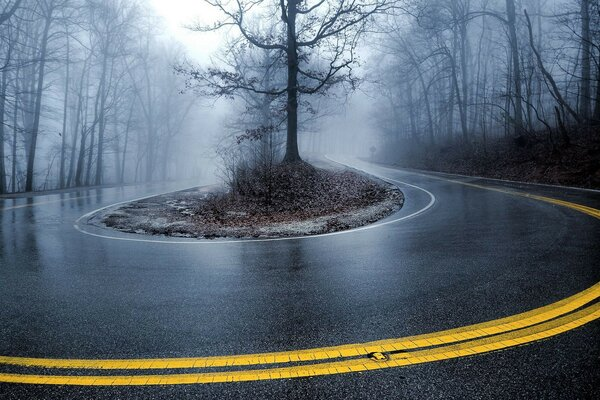 fog scenery road