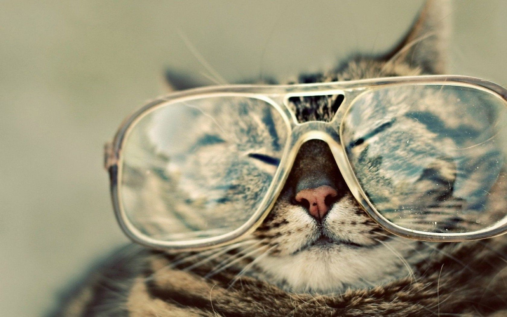 Muzzle Cat Glasses IPhone Wallpapers For Free