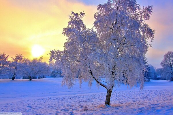 winter sun tree snow