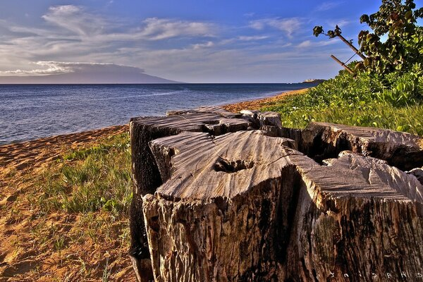 The stump of an old tree on the Bay
