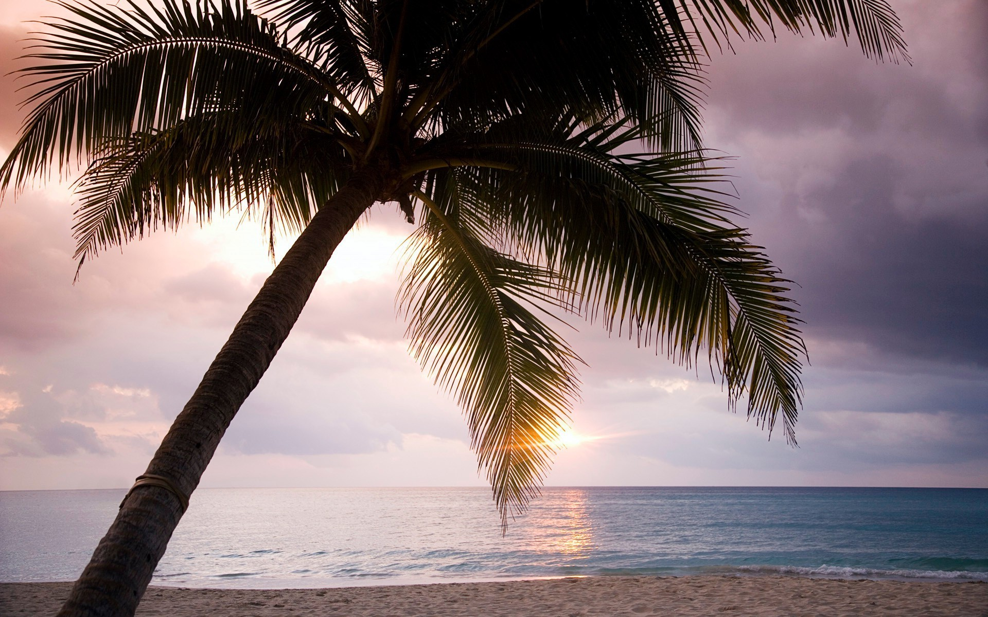 The palm tree on the beach in the tropics