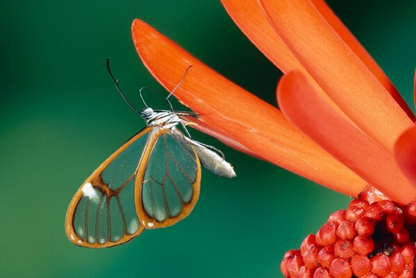 Beautiful butterfly on a flower