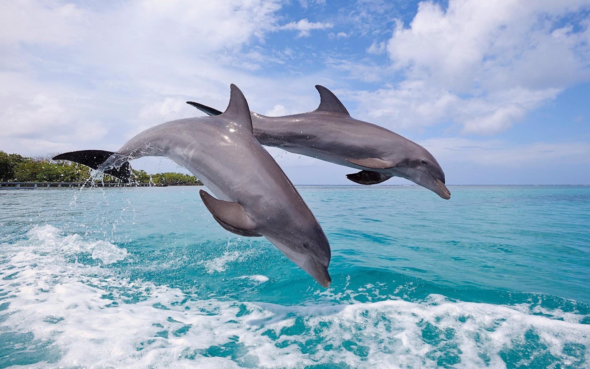 delfini-besplatno