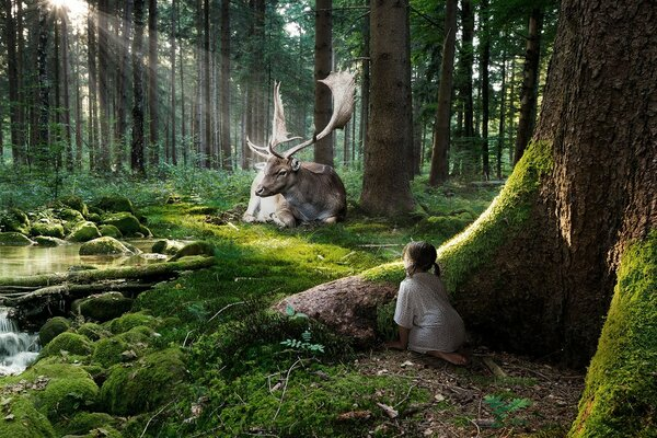 the girl spies the elk in the woods