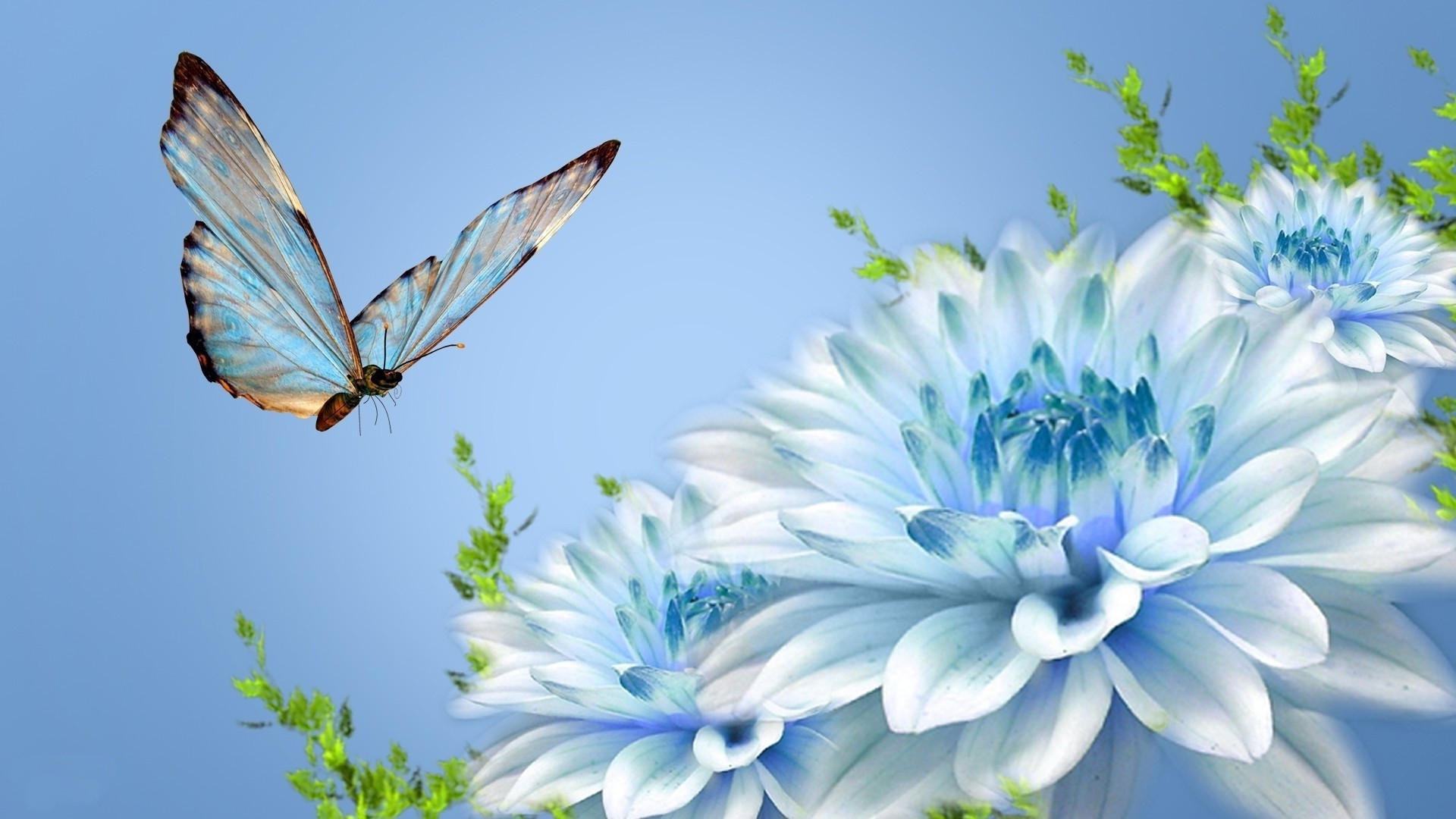 flowers nature butterfly flower summer beautiful flora garden color floral leaf delicate insect bright close-up desktop