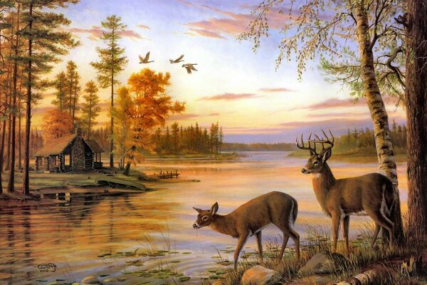 Two deer at the river