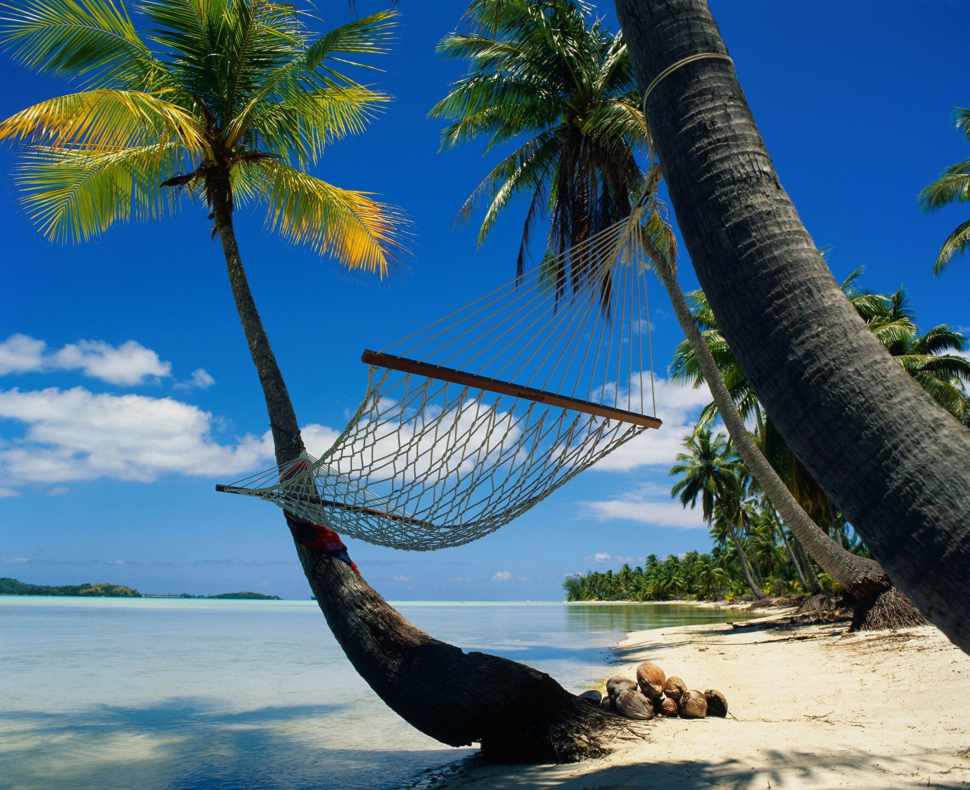 Hammock between palm trees with azure blue sea