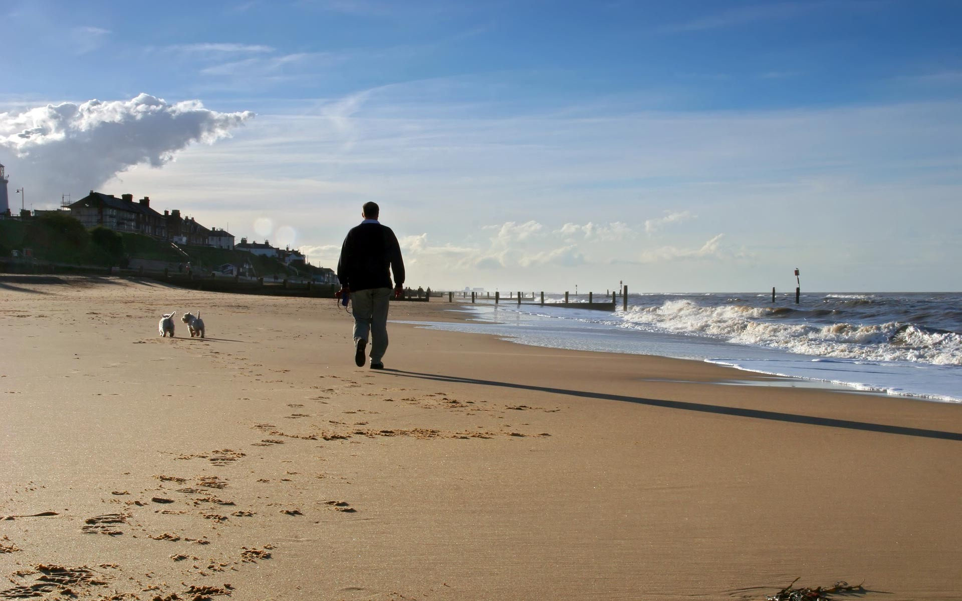 A man was walking two dogs near the sea