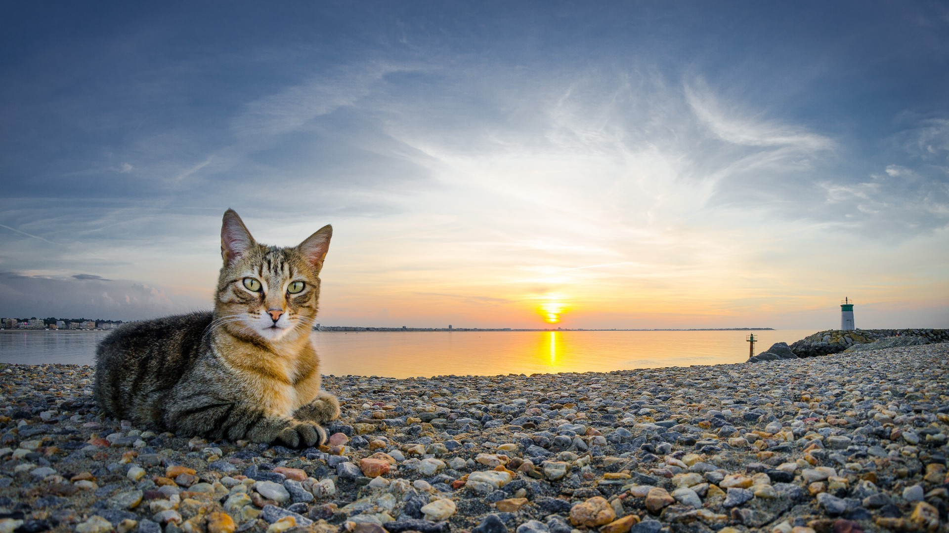 The Cat At The Seaside Android Wallpapers