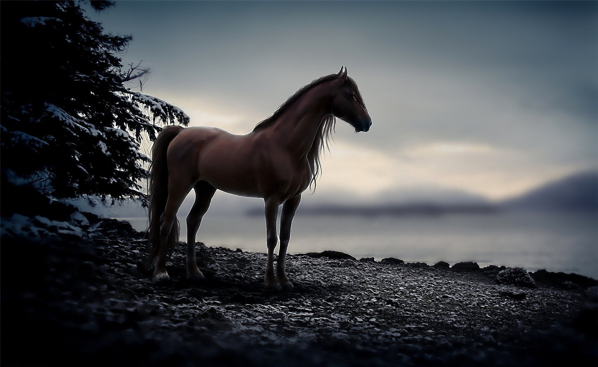 Graceful horse came to the shore of the lake