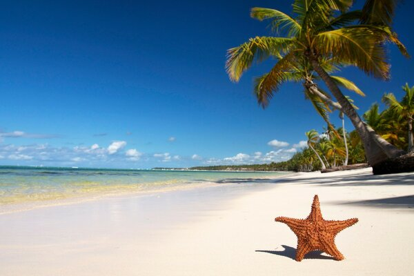 Starfish under a palm tree on the beach of the azure sea