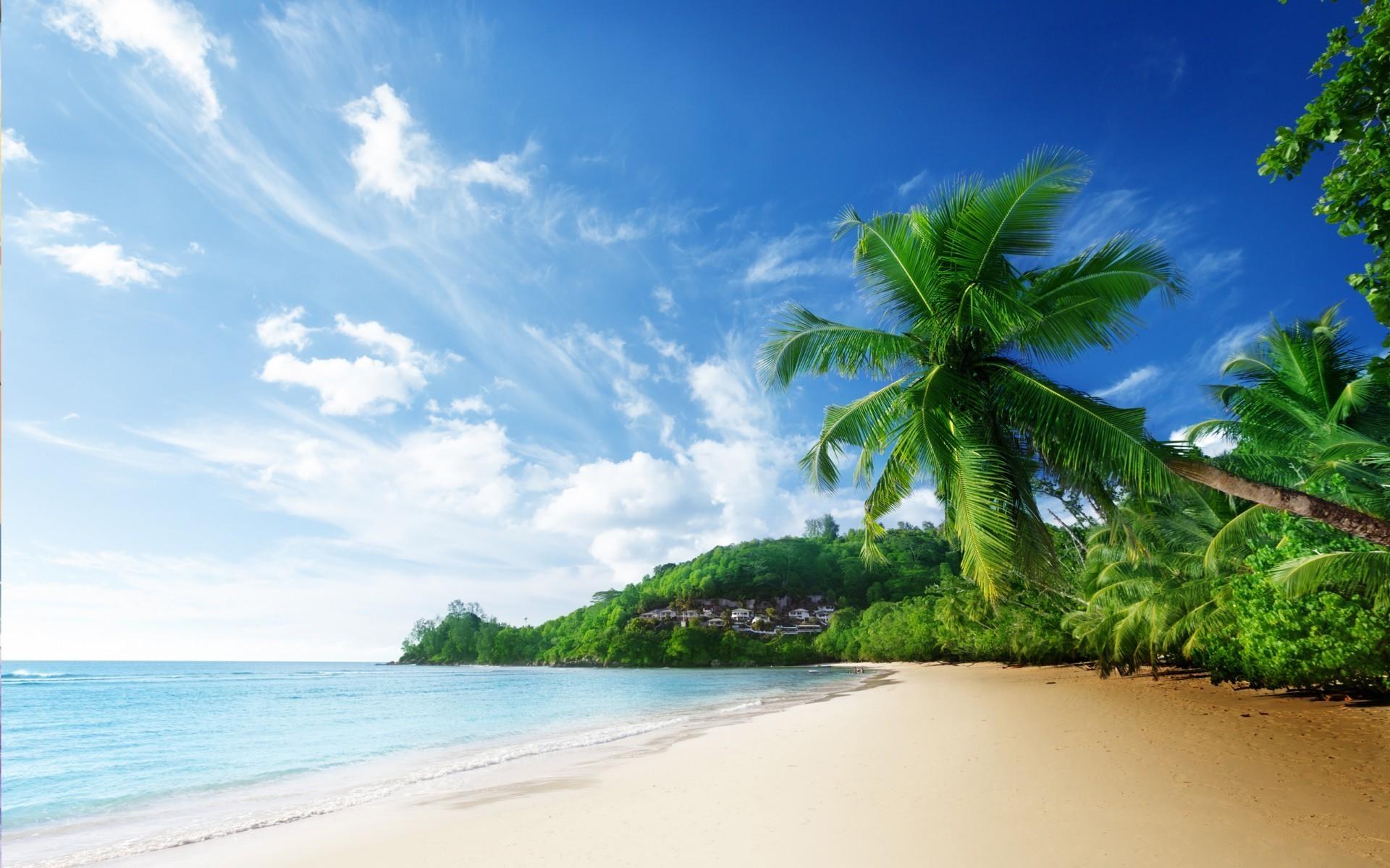 Берег пальмы лазурный скачать