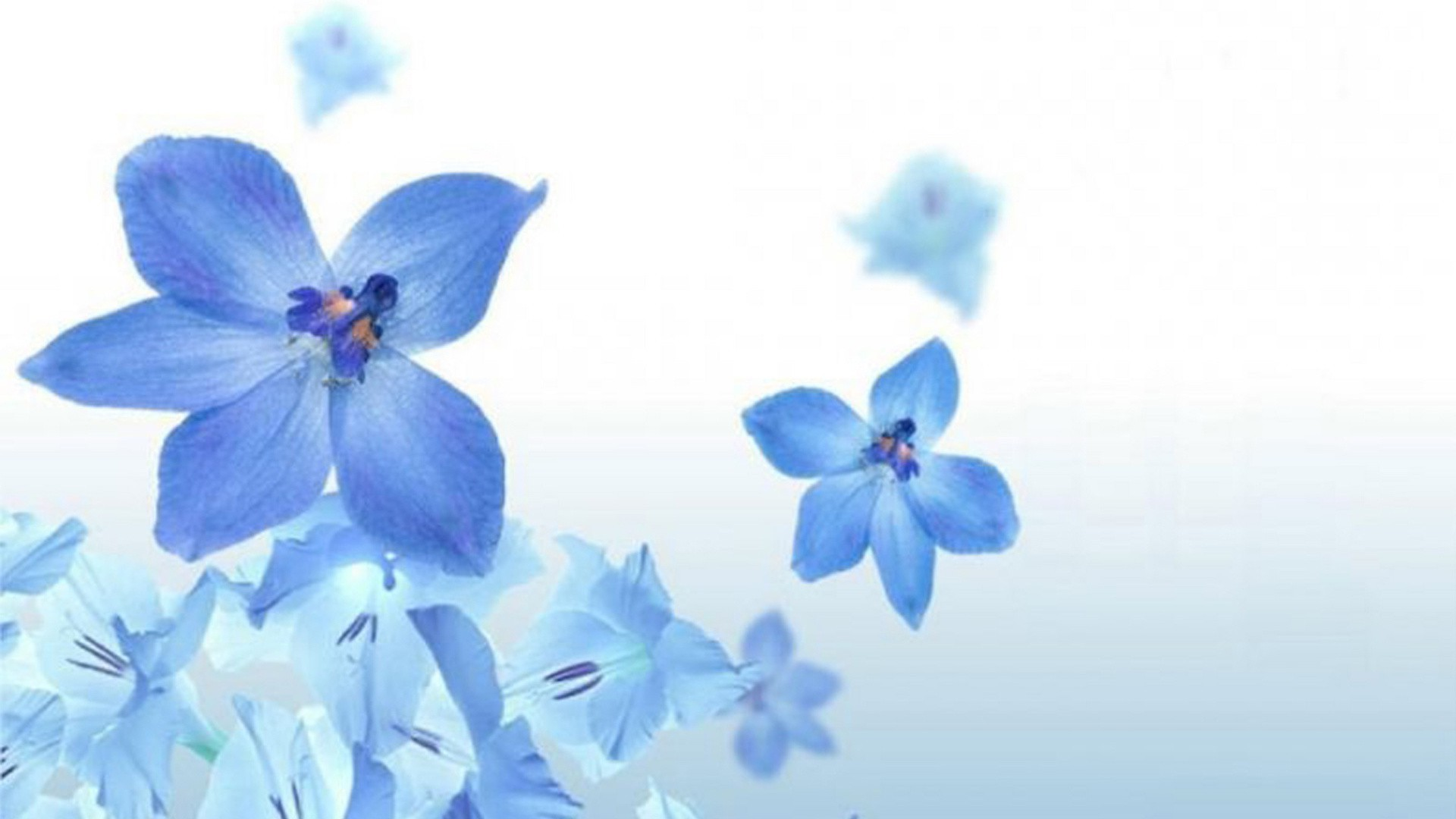 Blue Flowers On A White Background Android Wallpapers For Free