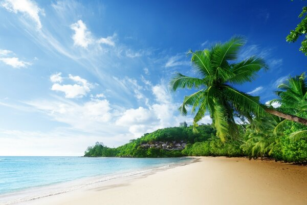 The palm tree on the shore of the azure sea