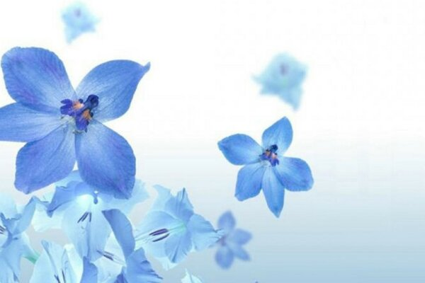 Blue flowers on a white background