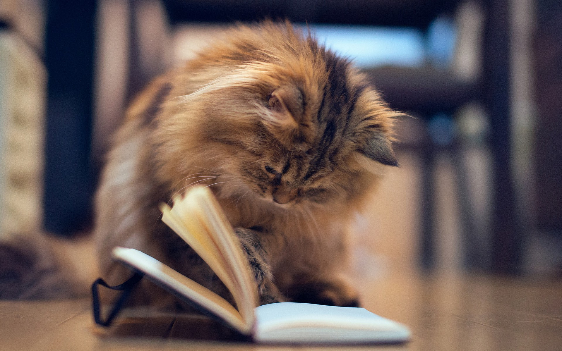 Fluffy cat enjoys reading the book