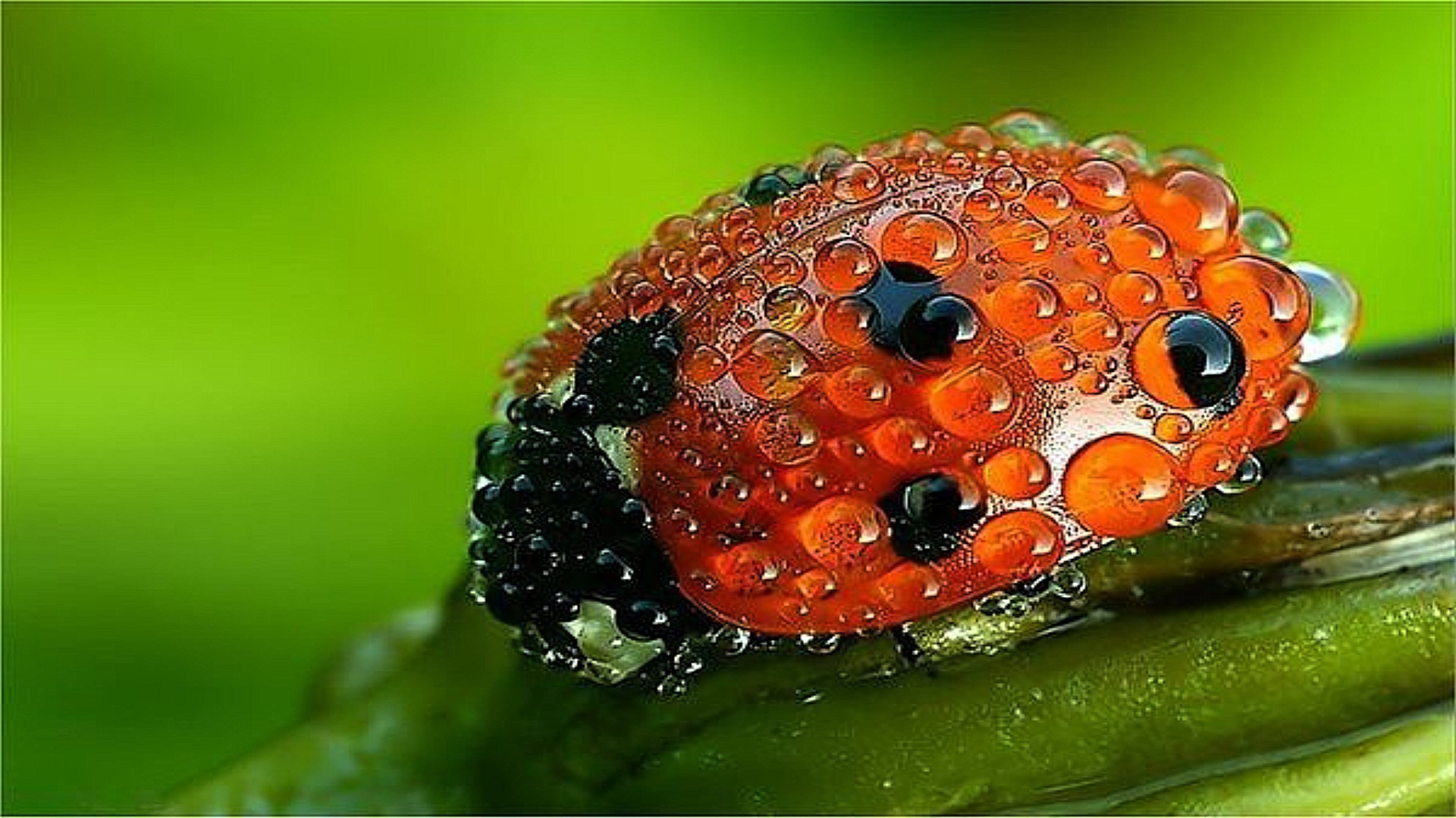 insects close-up nature desktop color food leaf garden close fruit flora bright